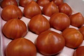 若松トマト